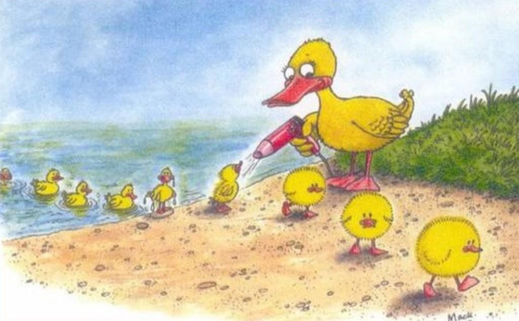 Canards au bain