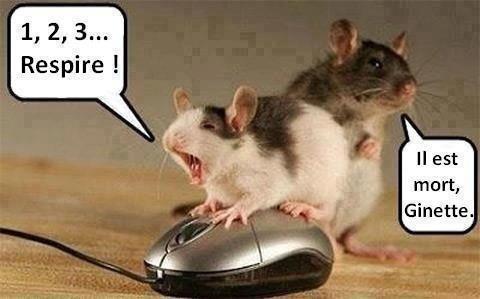 Humour petites souris