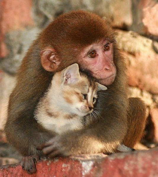Amour animaux 3