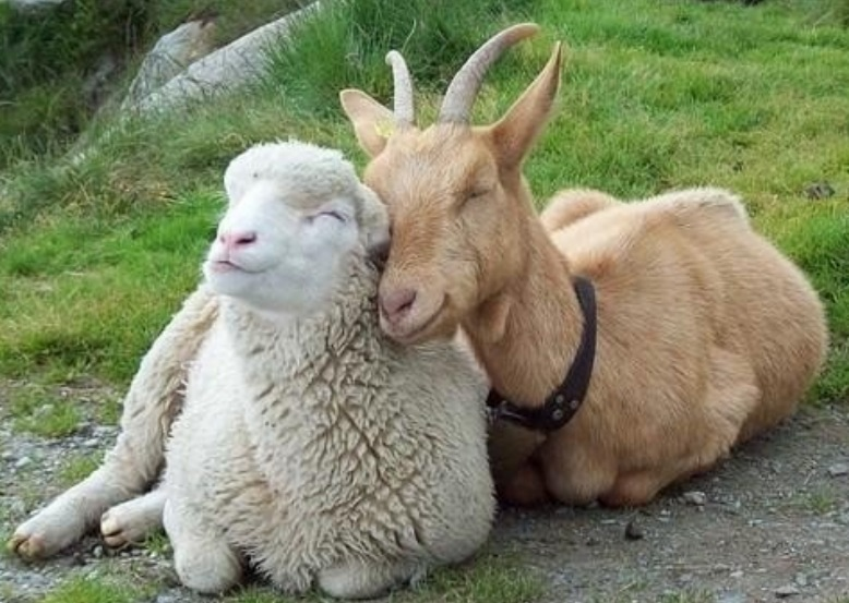 Amour animaux 4