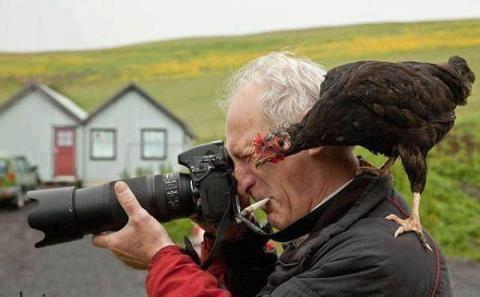 La poule et le photographe