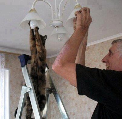 Le chat et l'électricien