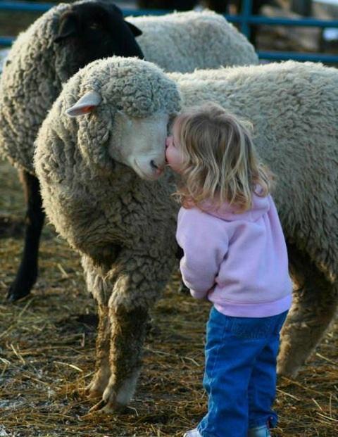 Le mouton et la petite fille
