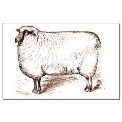 Mouton gif
