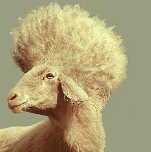 mouton: coiffeur