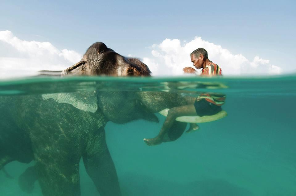 L'homme et l'éléphant