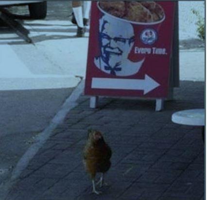 Humour la poule
