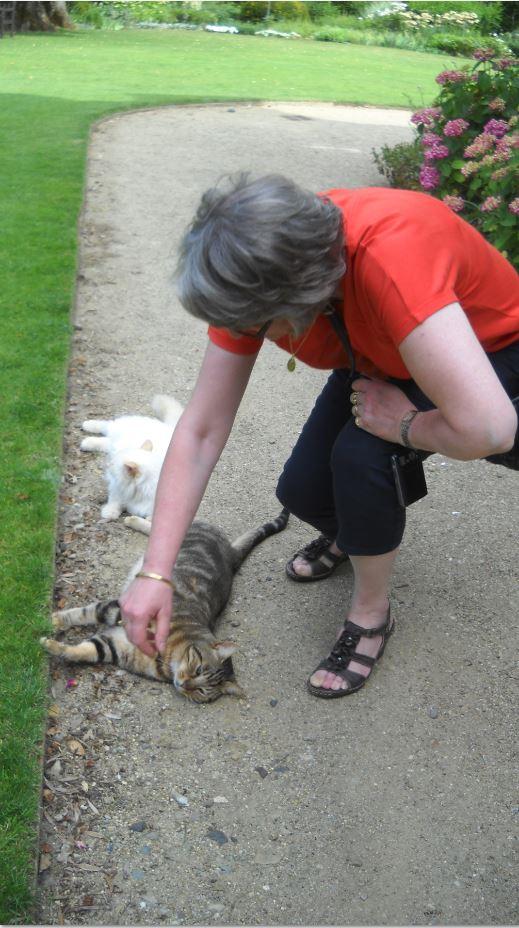 Apremont les chats