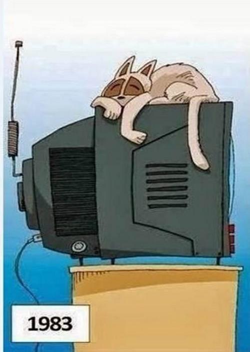 chat-sur-tele-en-1983