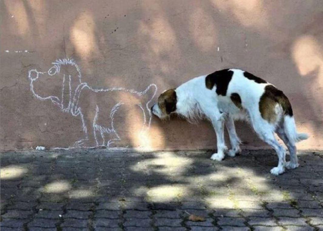 Humour chien