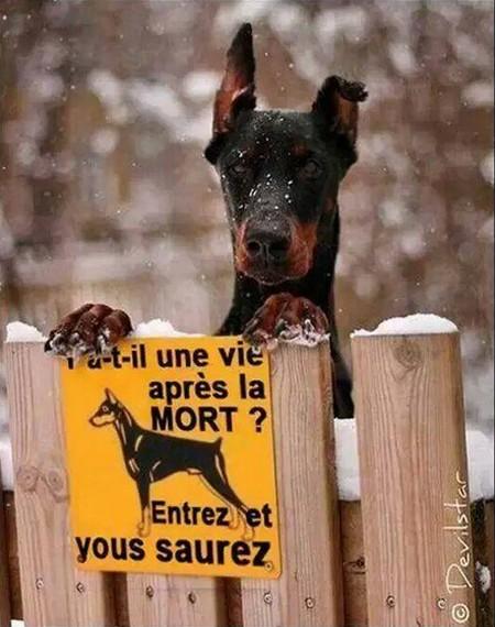 Humour le chien