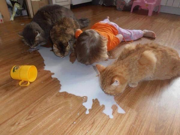 Humour enfant chats