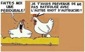 Humour poule pondeuse