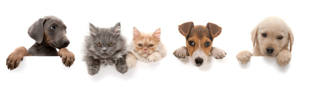 Chiens et chats gif