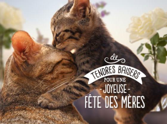 Fête des mères 2016
