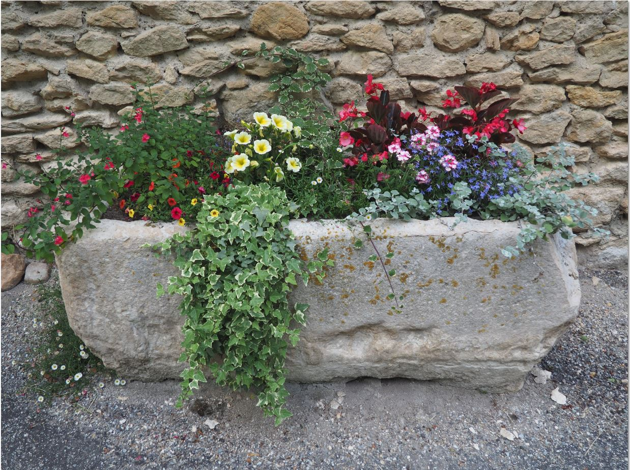 Fleurs 2016-1