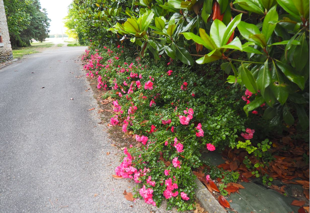 Fleurs 2016-6