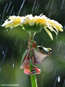 Grenouille sous la fleur gif