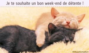 chats-bon-we-gif