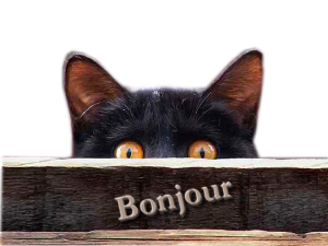chat-noir-bonjour-gif