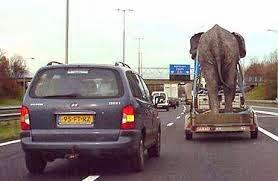 humour-voiture-et-elephant