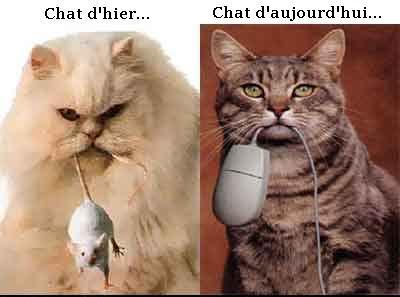 humour-chats-et-souris