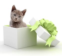 cadeau-chat-noel-gif