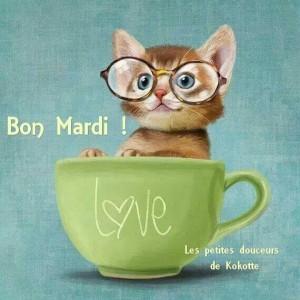 chat-a-lunettes-bon-mardi-gif