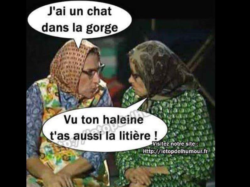 humour-chat-ds-la-gorge