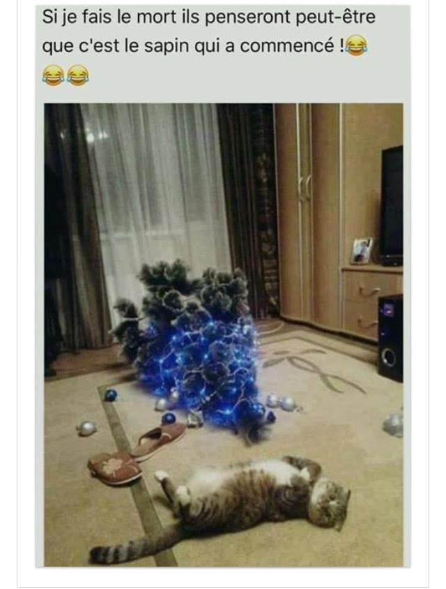 humour-chat-sapin-tombe