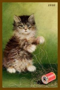 Chat à la bobine rouge gif