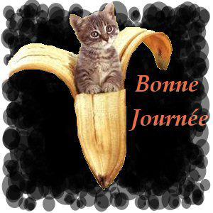 Chat banane bonnejournée gif