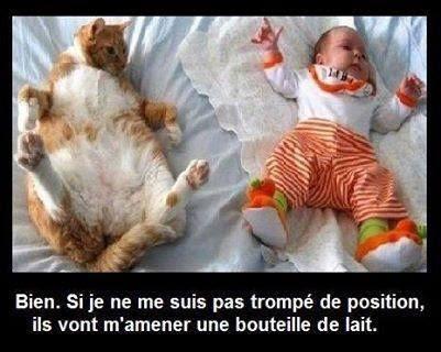 Chat humour bébé