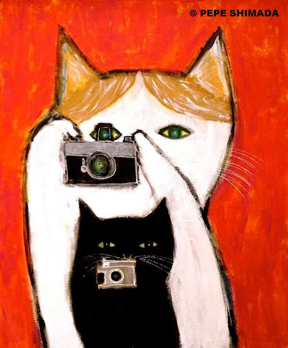 Chats photographes gif