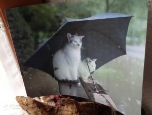 Chats sous le parapluie