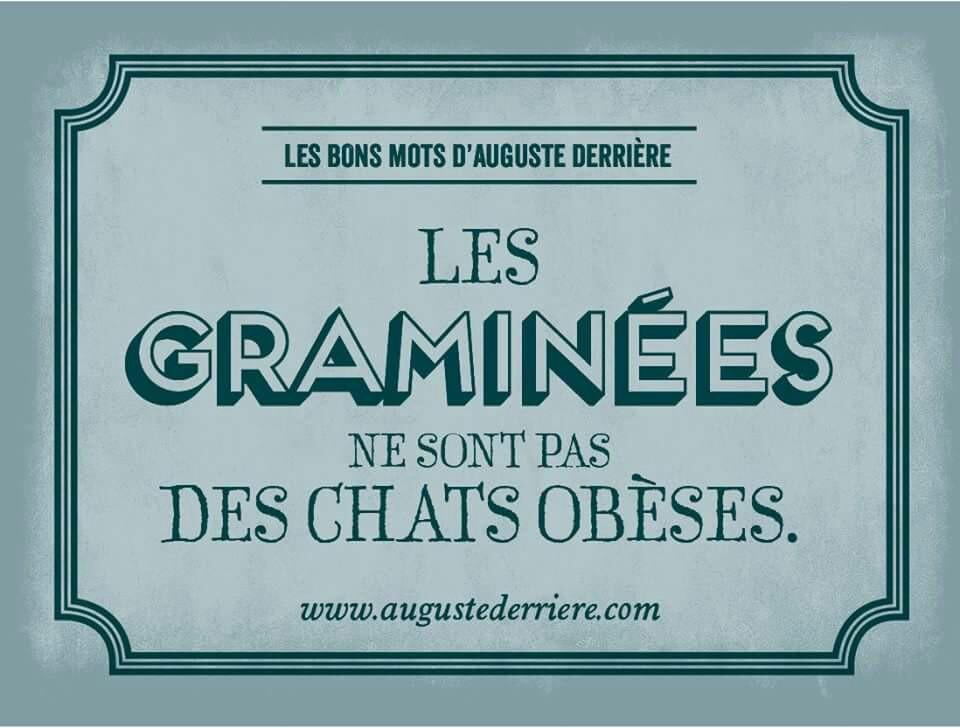 Humour Les graminées ...