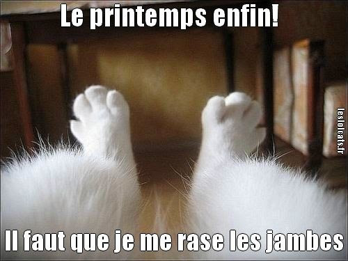 Humour Raser les jambes chat