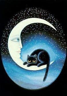 chat sur la lune