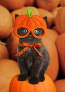 chat-halloween