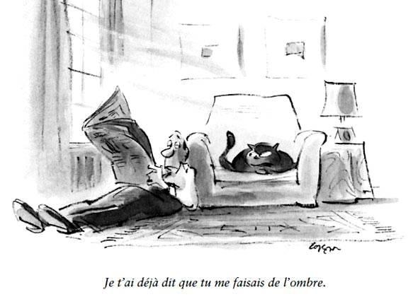 humour-chat-sur-fauteuil